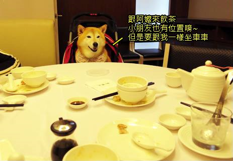 寵物推車前進知名飲茶餐廳