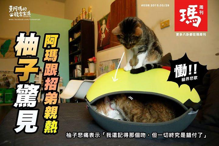 《人氣寵物》黃阿瑪的後宮生活~FB1308小巨蛋寵物床窩