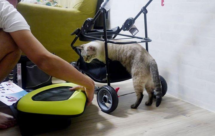 《人氣寵物》奶茶椰果~FS1009五彩繽紛寵物推車提包組