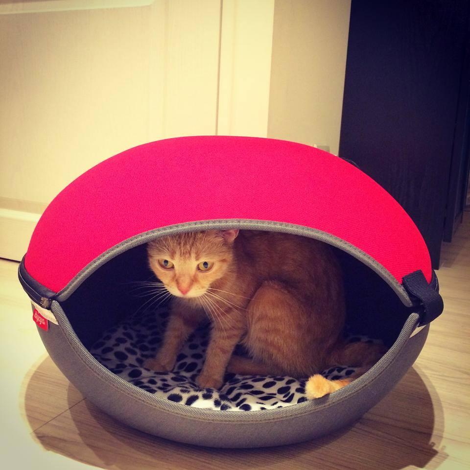 《部落客激推》浿機Pupupepe~FB1308小巨蛋寵物窩床