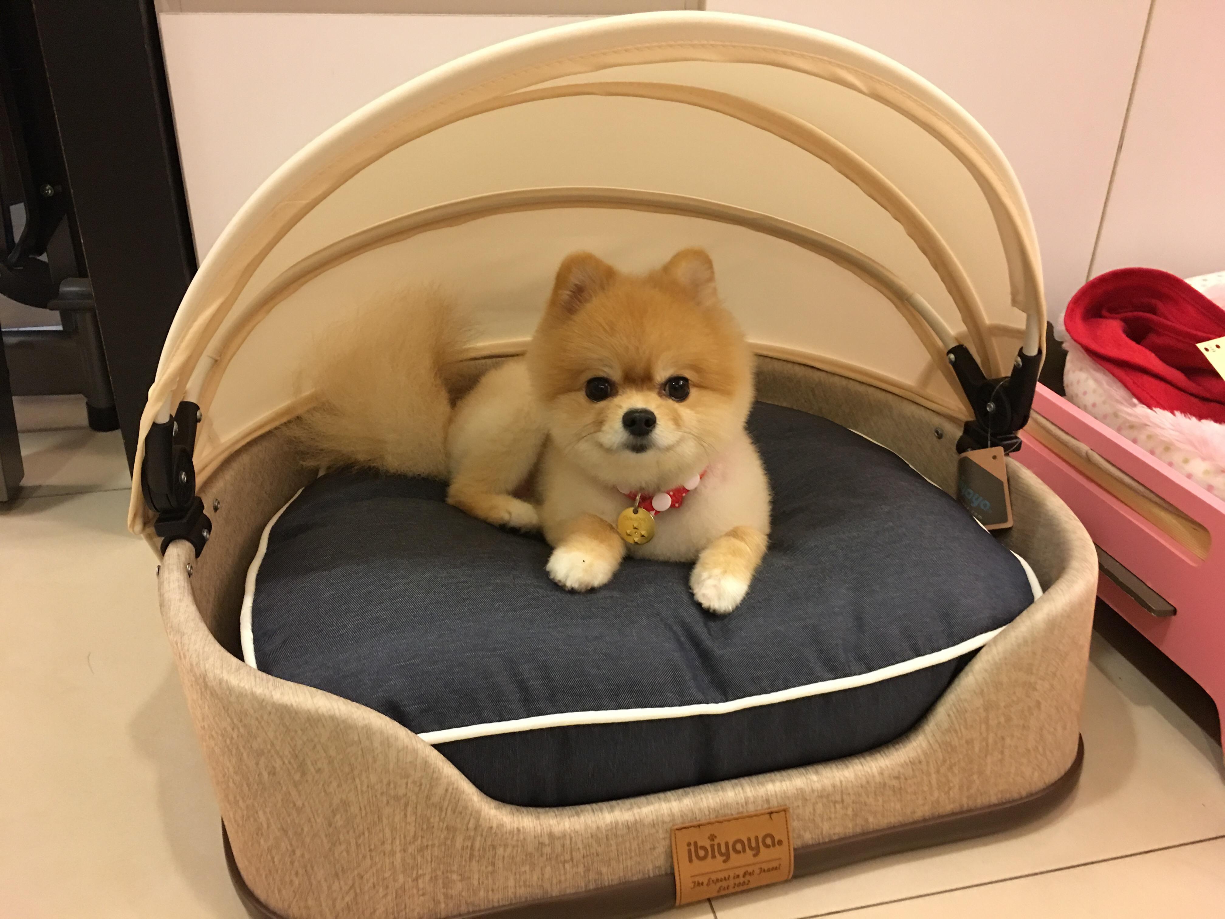 ★星之選★戴安娜 Jin~FB1530寵物發呆亭